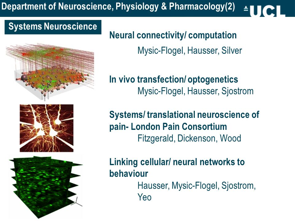 Systems Neuroscience Neural connectivity/ computation Mysic-Flogel, Hausser, Silver In vivo transfection/ optogenetics Mysic-Flogel, Hausser, Sjostrom Systems/ translational neuroscience of pain- London Pain Consortium Fitzgerald, Dickenson, Wood Linking cellular/ neural networks to behaviour Hausser, Mysic-Flogel, Sjostrom, Yeo Department of Neuroscience, Physiology & Pharmacology(2)