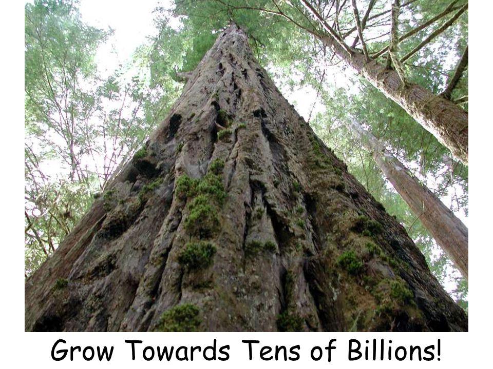Grow Towards Tens of Billions!