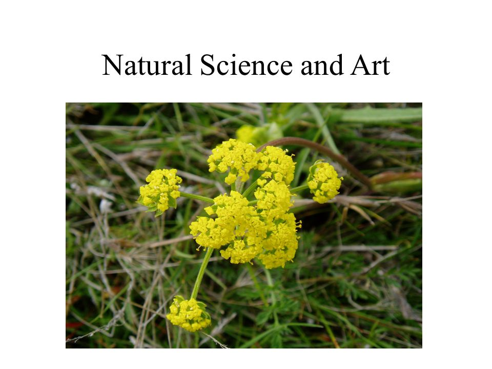 Natural Science and Art