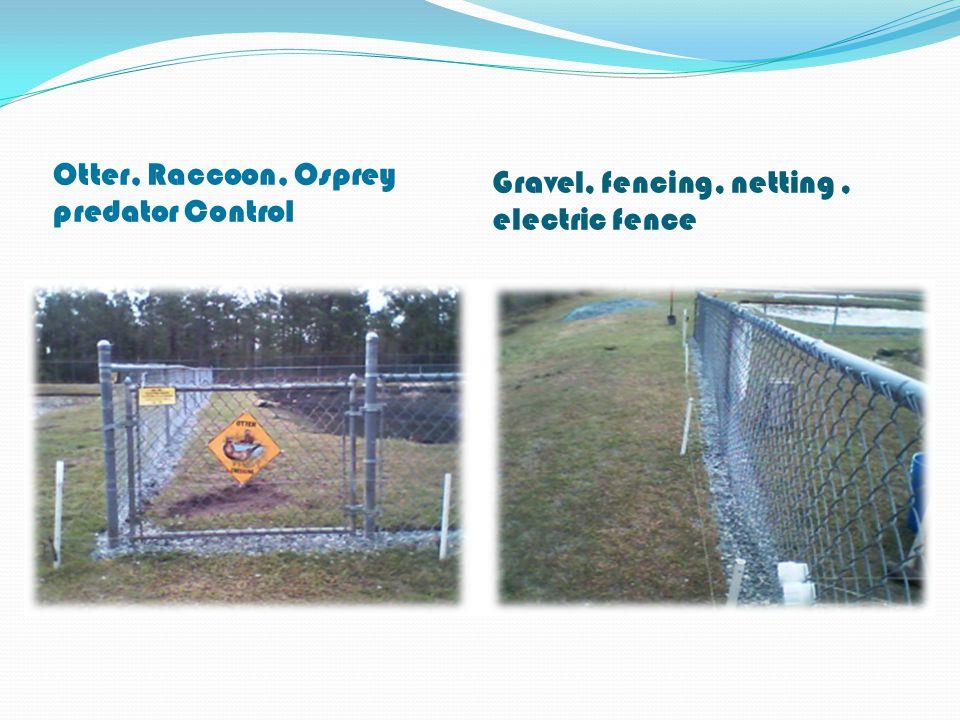 Otter, Raccoon, Osprey predator Control Gravel, fencing, netting, electric fence