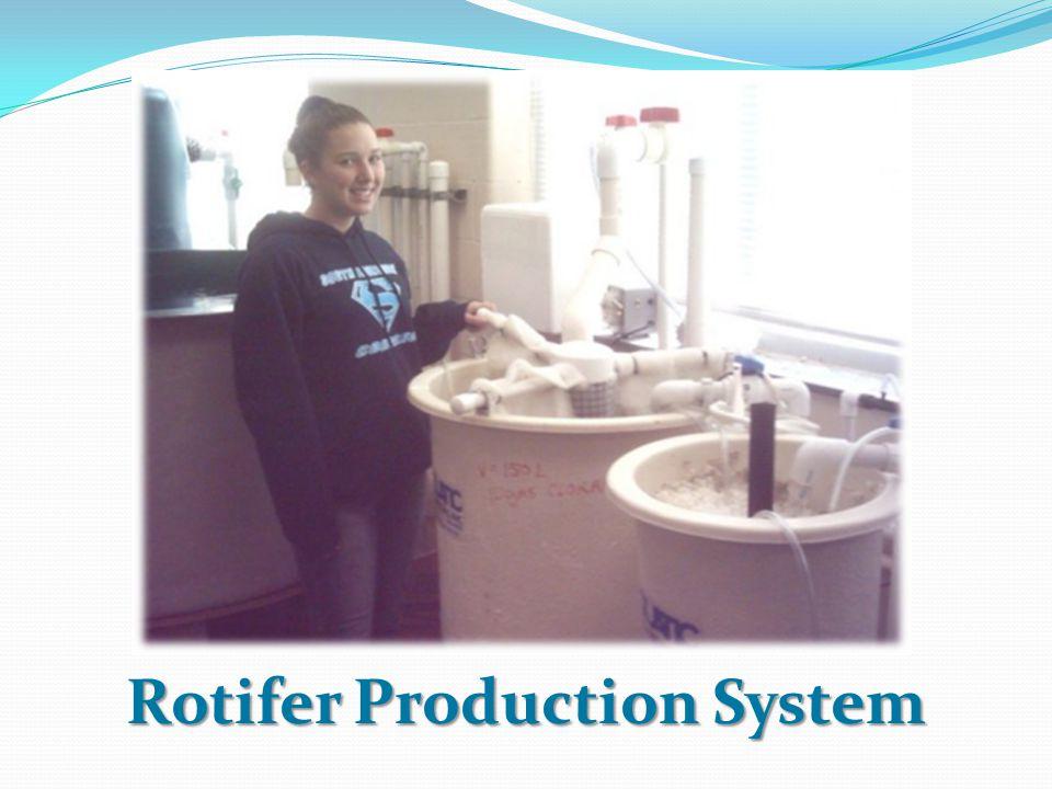 Rotifer Production System