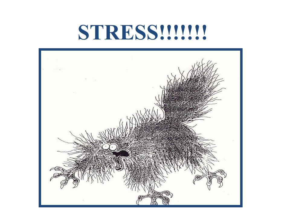 STRESS!!!!!!!