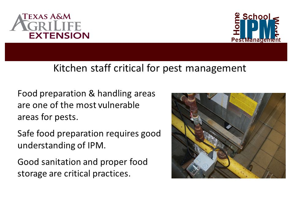 Kitchen staff critical for pest management Food preparation & handling areas are one of the most vulnerable areas for pests.