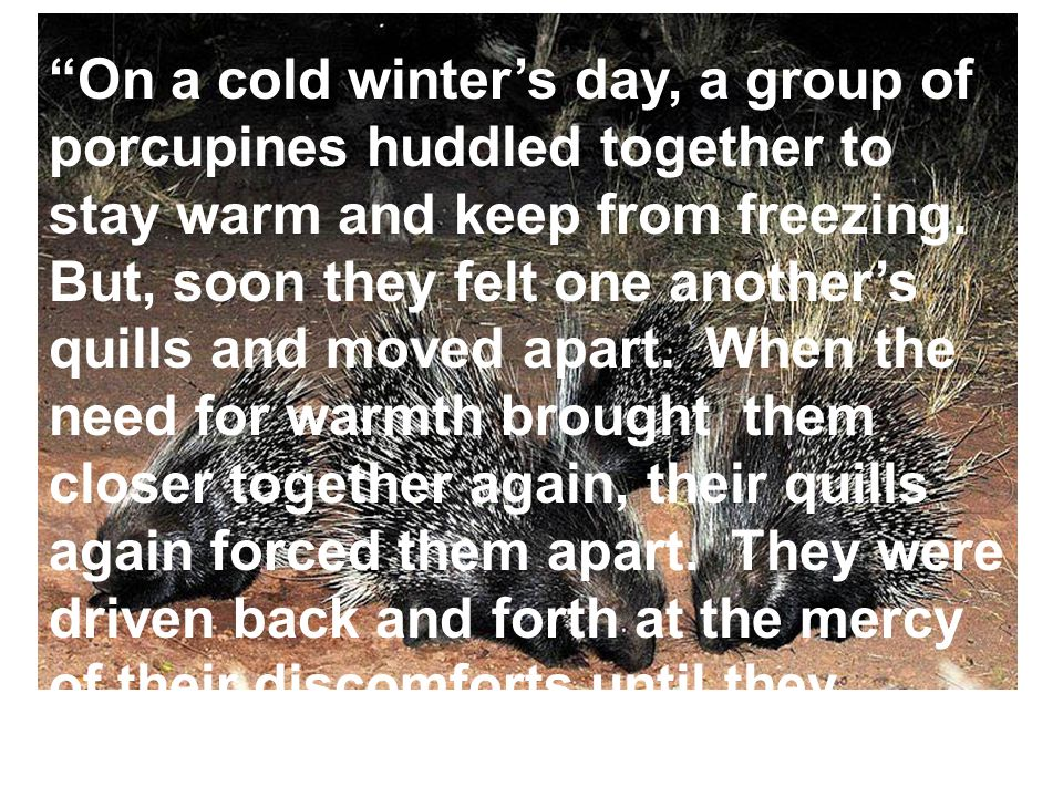 """On a cold winter's day, a group of porcupines huddled together to stay warm and keep from freezing. But, soon they felt one another's quills and move"