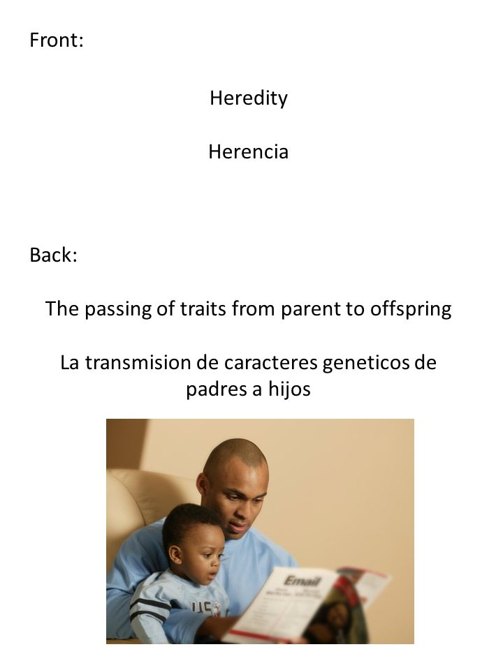 Front: Heredity Herencia Back: The passing of traits from parent to offspring La transmision de caracteres geneticos de padres a hijos