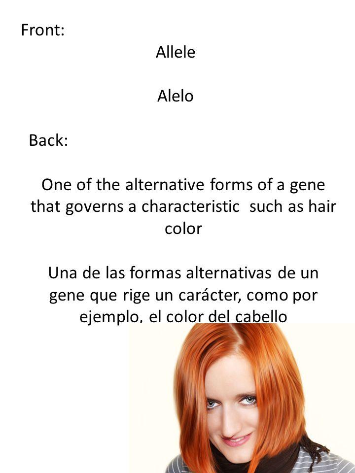 Front: Allele Alelo Back: One of the alternative forms of a gene that governs a characteristic such as hair color Una de las formas alternativas de un