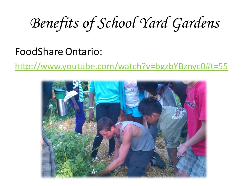 Benefits of School Yard Gardens FoodShare Ontario: http://www.youtube.com/watch v=bgzbYBznyc0#t=55