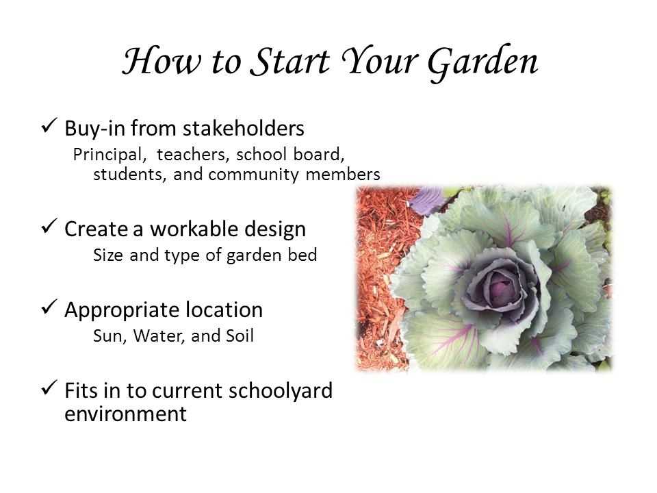 How to Start Your Garden Buy-in from stakeholders Principal, teachers, school board, students, and community members Create a workable design Size and type of garden bed Appropriate location Sun, Water, and Soil Fits in to current schoolyard environment
