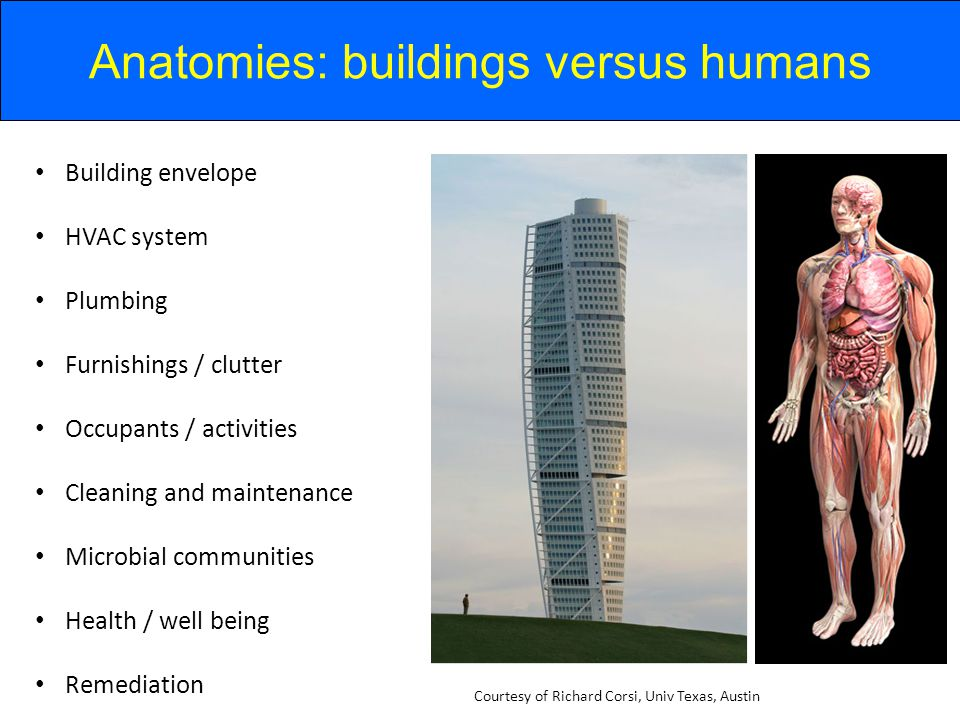 Anatomies: buildings versus humans Building envelope HVAC system Plumbing Furnishings / clutter Occupants / activities Cleaning and maintenance Microbial communities Health / well being Remediation Courtesy of Richard Corsi, Univ Texas, Austin