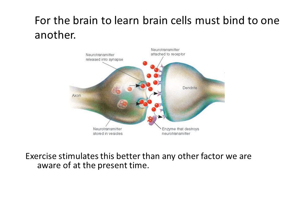 For the brain to learn brain cells must bind to one another.
