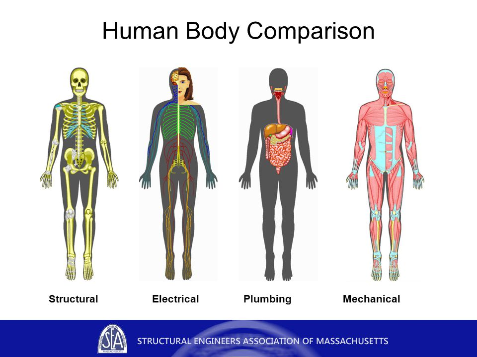 Human Body Comparison StructuralElectricalPlumbingMechanical