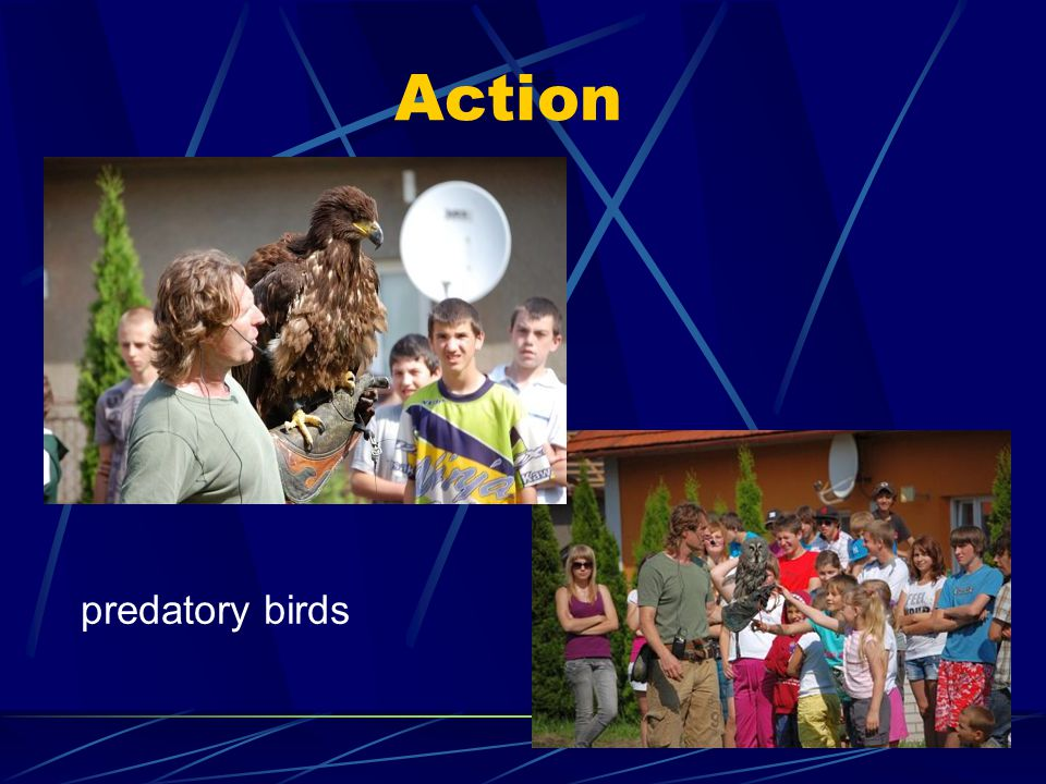 Action predatory birds