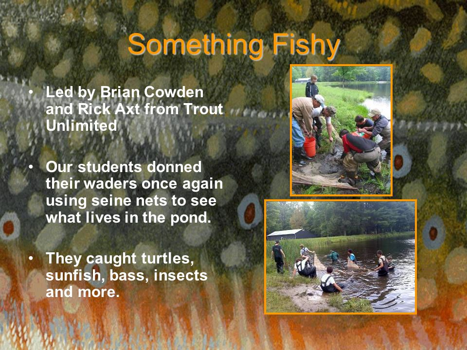 Something Fishy Led by Brian Cowden and Rick Axt from Trout Unlimited Our students donned their waders once again using seine nets to see what lives i