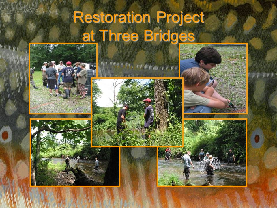 Restoration Project at Three Bridges