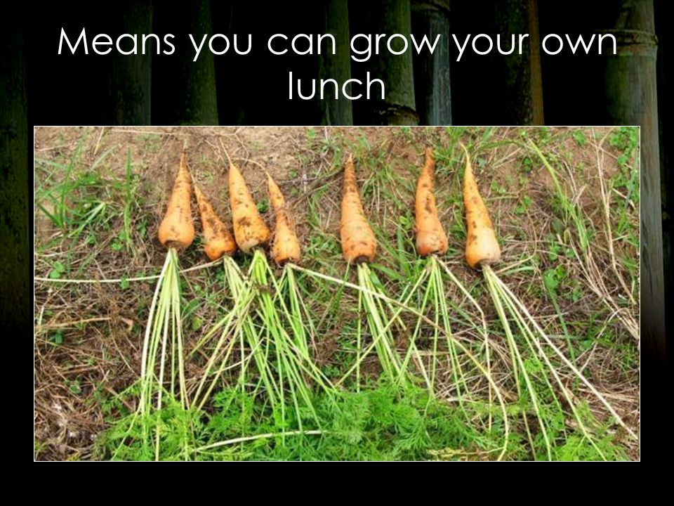 Means you can grow your own lunch