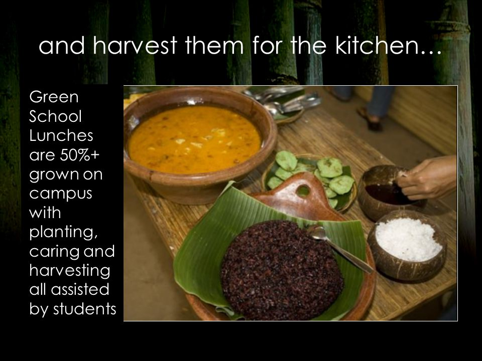 and harvest them for the kitchen… Green School Lunches are 50%+ grown on campus with planting, caring and harvesting all assisted by students