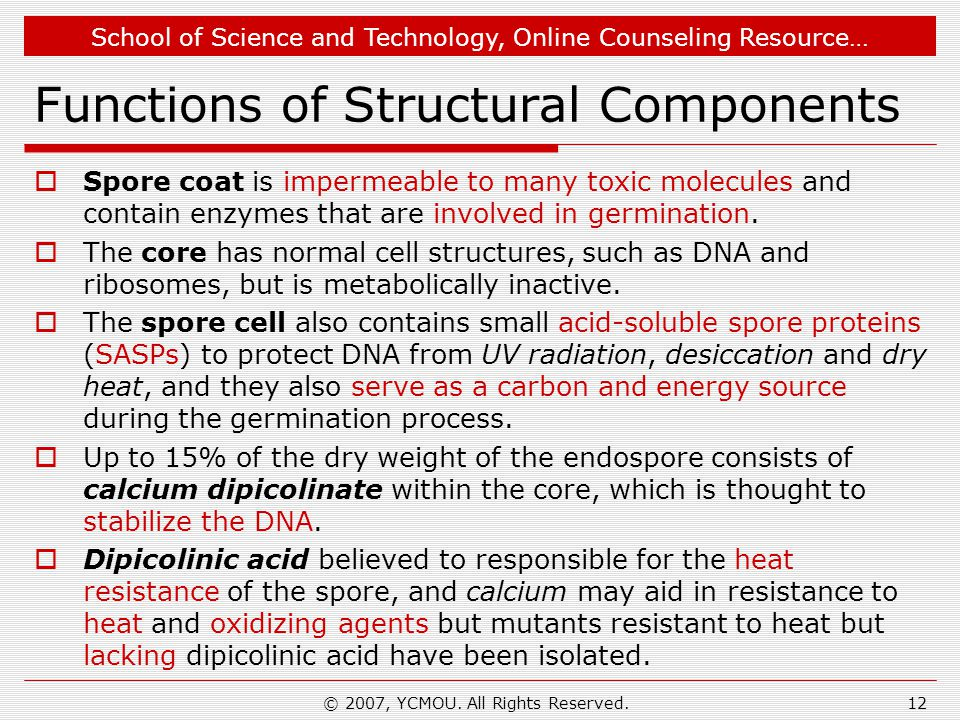 School of Science and Technology, Online Counseling Resource… Functions of Structural Components  Spore coat is impermeable to many toxic molecules and contain enzymes that are involved in germination.