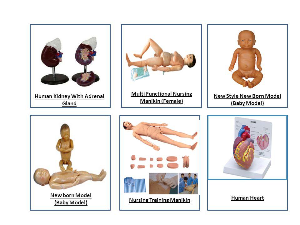 Human Kidney With Adrenal Gland Multi Functional Nursing Manikin (Female) New Style New Born Model (Baby Model) New born Model (Baby Model) Nursing Tr