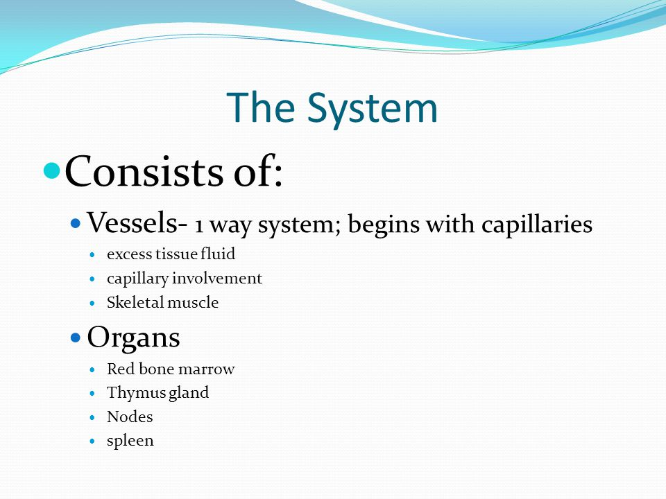 The System Consists of: Vessels- 1 way system; begins with capillaries excess tissue fluid capillary involvement Skeletal muscle Organs Red bone marro