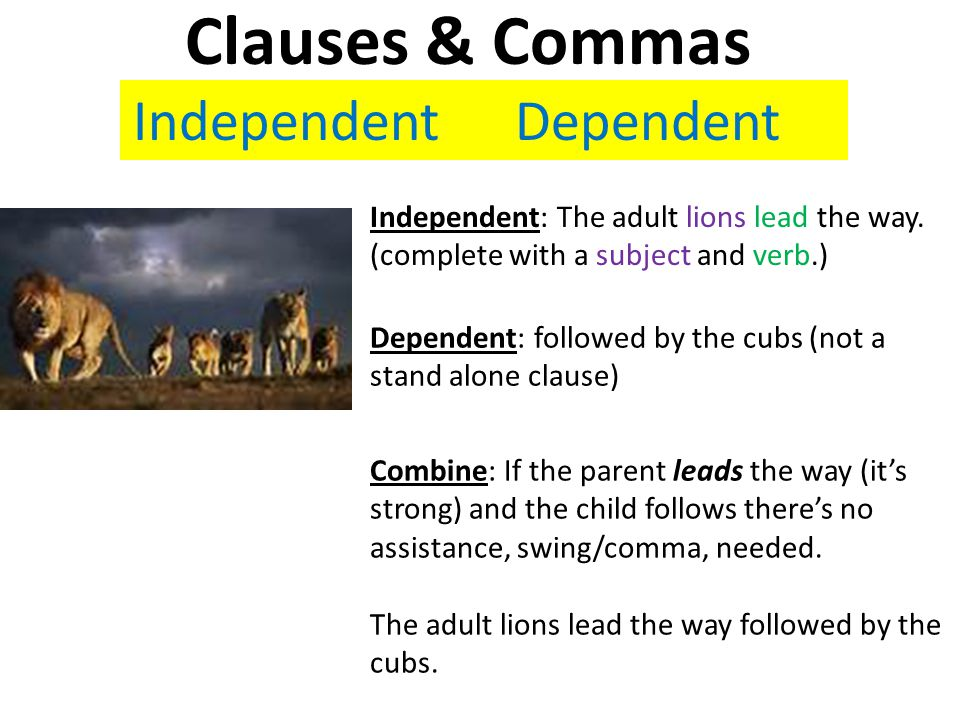 Dependent: followed by the cubs (not a stand alone clause) Independent: The adult lions lead the way.
