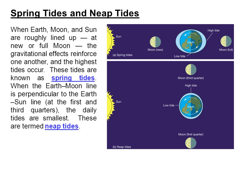 Spring Tides and Neap Tides When Earth, Moon, and Sun are roughly lined up — at new or full Moon — the gravitational effects reinforce one another, an