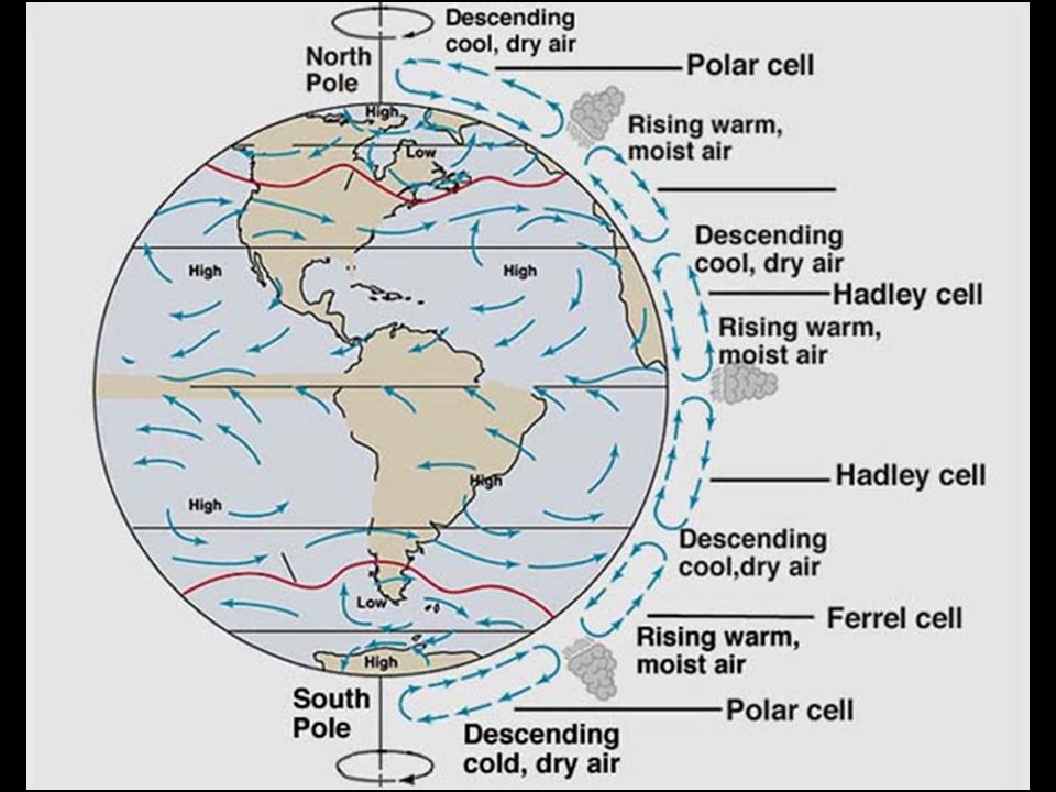 Atmospheric Circulation How does the air circulate? Warm air rises at the equator, cools off at high altitude, then falls back to the surface at 30 o