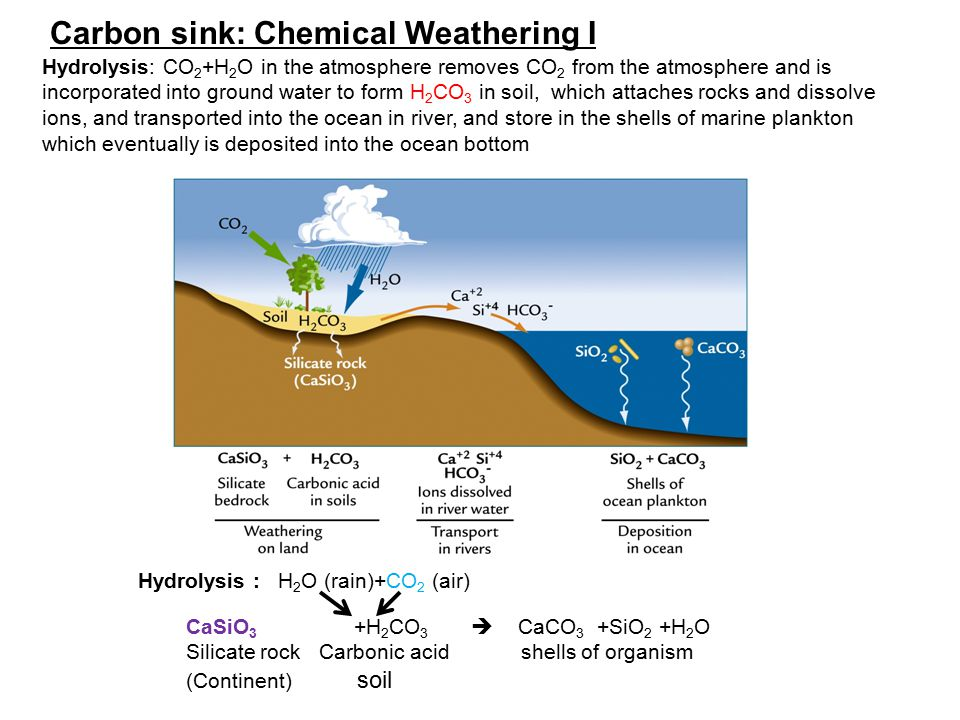 Carbon sink: Chemical Weathering I Hydrolysis: CO 2 +H 2 O in the atmosphere removes CO 2 from the atmosphere and is incorporated into ground water to form H 2 CO 3 in soil, which attaches rocks and dissolve ions, and transported into the ocean in river, and store in the shells of marine plankton which eventually is deposited into the ocean bottom Hydrolysis : H 2 O (rain)+CO 2 (air) CaSiO 3 +H 2 CO 3  CaCO 3 +SiO 2 +H 2 O Silicate rock Carbonic acid shells of organism (Continent) soil