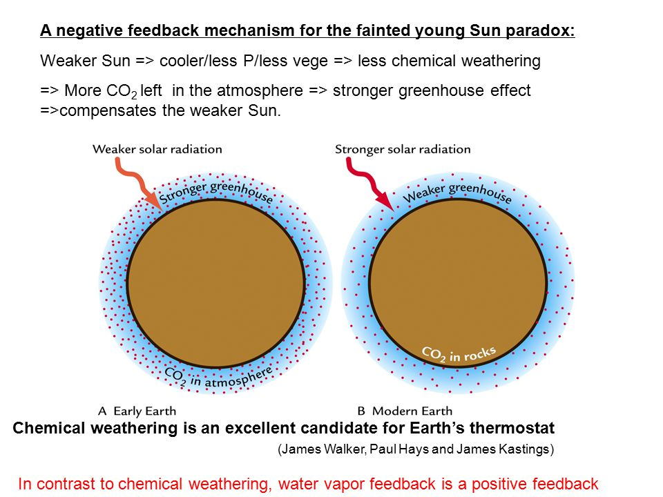 A negative feedback mechanism for the fainted young Sun paradox: Weaker Sun => cooler/less P/less vege => less chemical weathering => More CO 2 left in the atmosphere => stronger greenhouse effect =>compensates the weaker Sun.