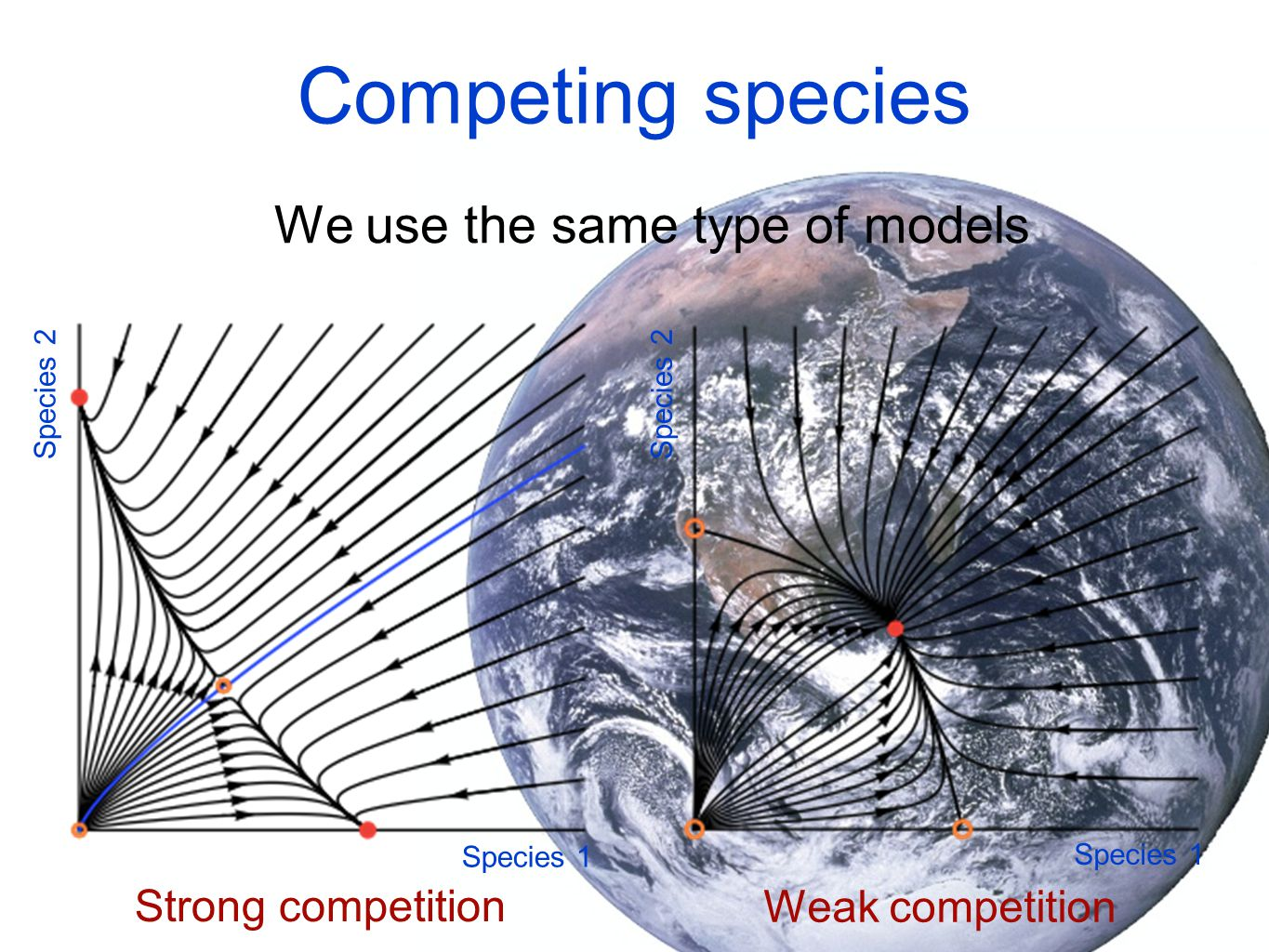 Competing species We use the same type of models Strong competition Weak competition Species 1 Species 2
