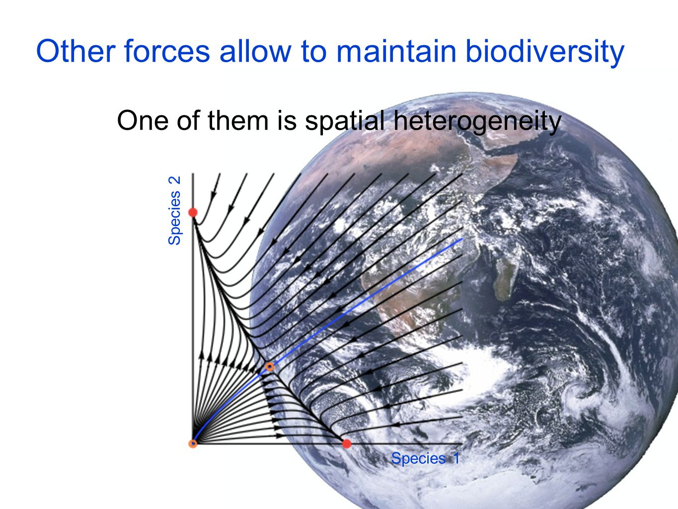 Other forces allow to maintain biodiversity One of them is spatial heterogeneity Species 1 Species 2