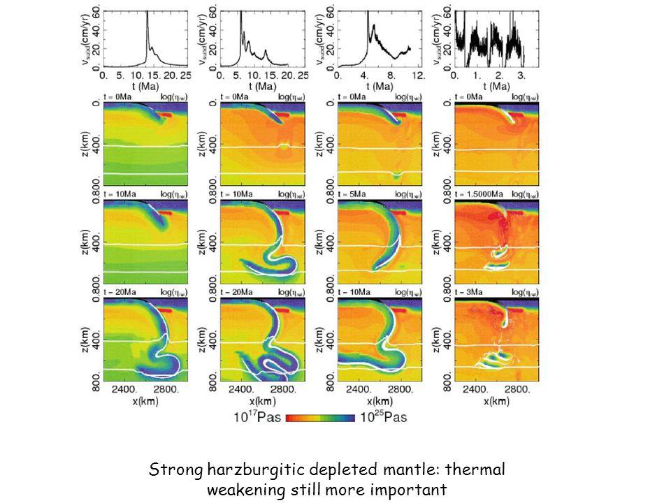 Strong harzburgitic depleted mantle: thermal weakening still more important