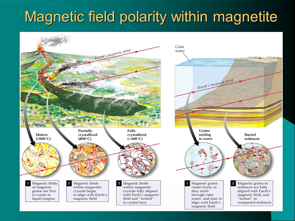 Magnetic field polarity within magnetite