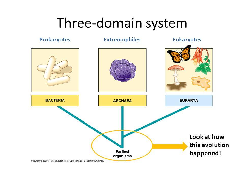 Three-domain system ExtremophilesProkaryotesEukaryotes Look at how this evolution happened!