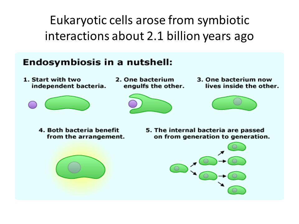 Eukaryotic cells arose from symbiotic interactions about 2.1 billion years ago