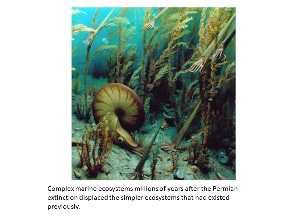 Complex marine ecosystems millions of years after the Permian extinction displaced the simpler ecosystems that had existed previously.