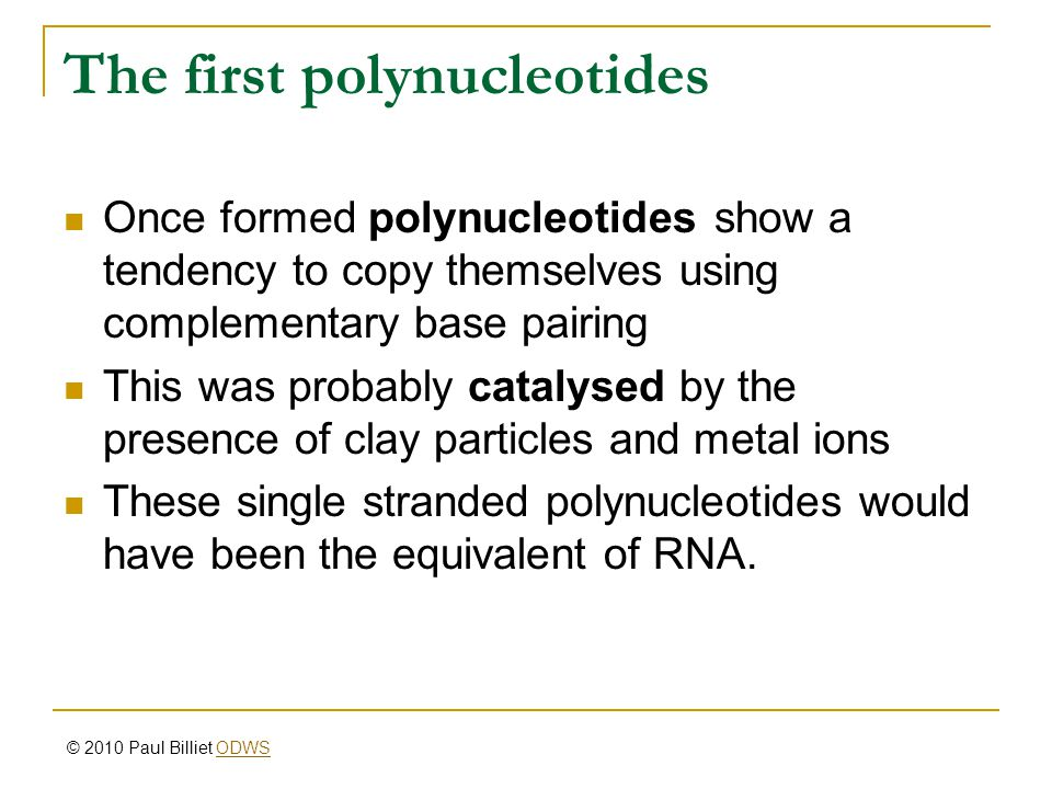 The first polynucleotides Once formed polynucleotides show a tendency to copy themselves using complementary base pairing This was probably catalysed