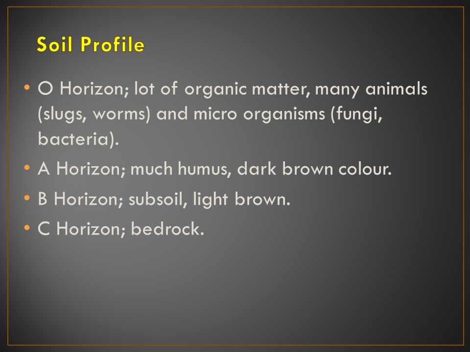 O Horizon; lot of organic matter, many animals (slugs, worms) and micro organisms (fungi, bacteria).
