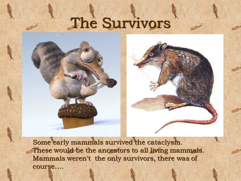 The Survivors Some early mammals survived the cataclysm. These would be the ancestors to all living mammals. Mammals weren't the only survivors, there