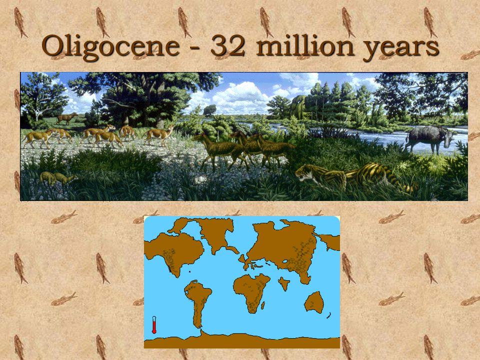 Oligocene - 32 million years