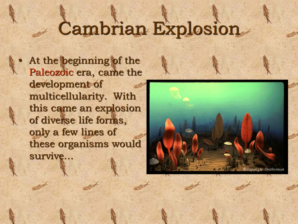 Cambrian Explosion At the beginning of the Paleozoic era, came the development of multicellularity. With this came an explosion of diverse life forms,