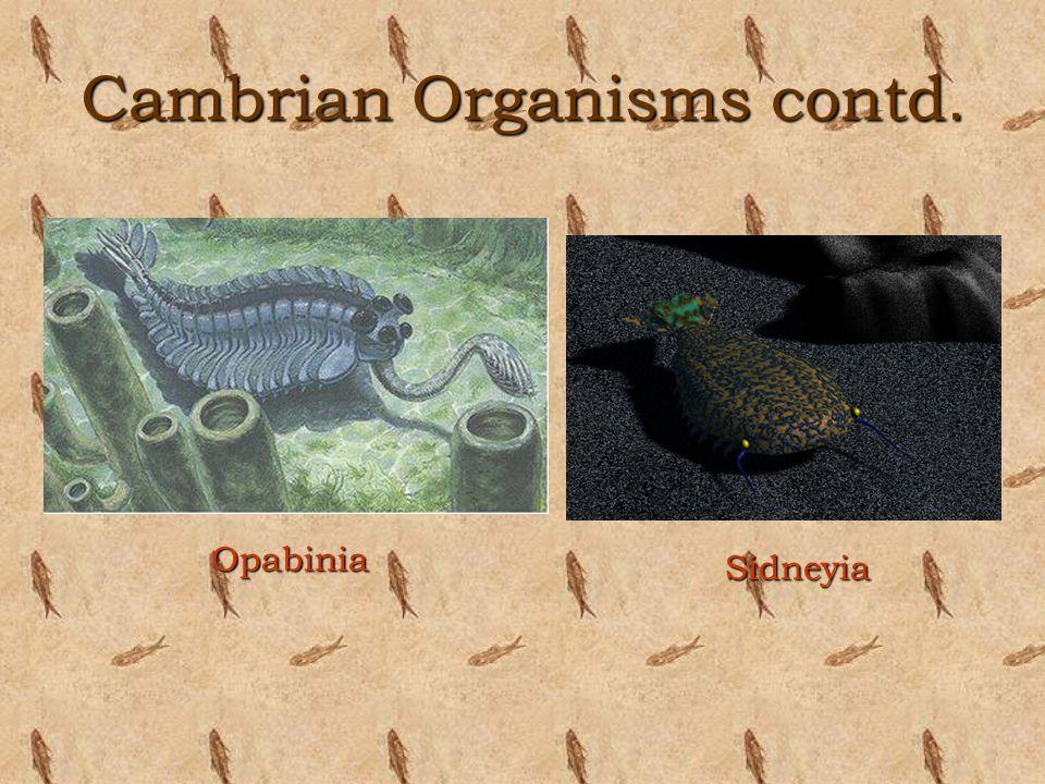 Cambrian Organisms contd. Sidneyia Opabinia