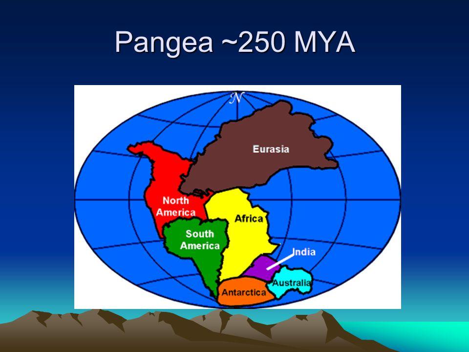 Pangea ~250 MYA