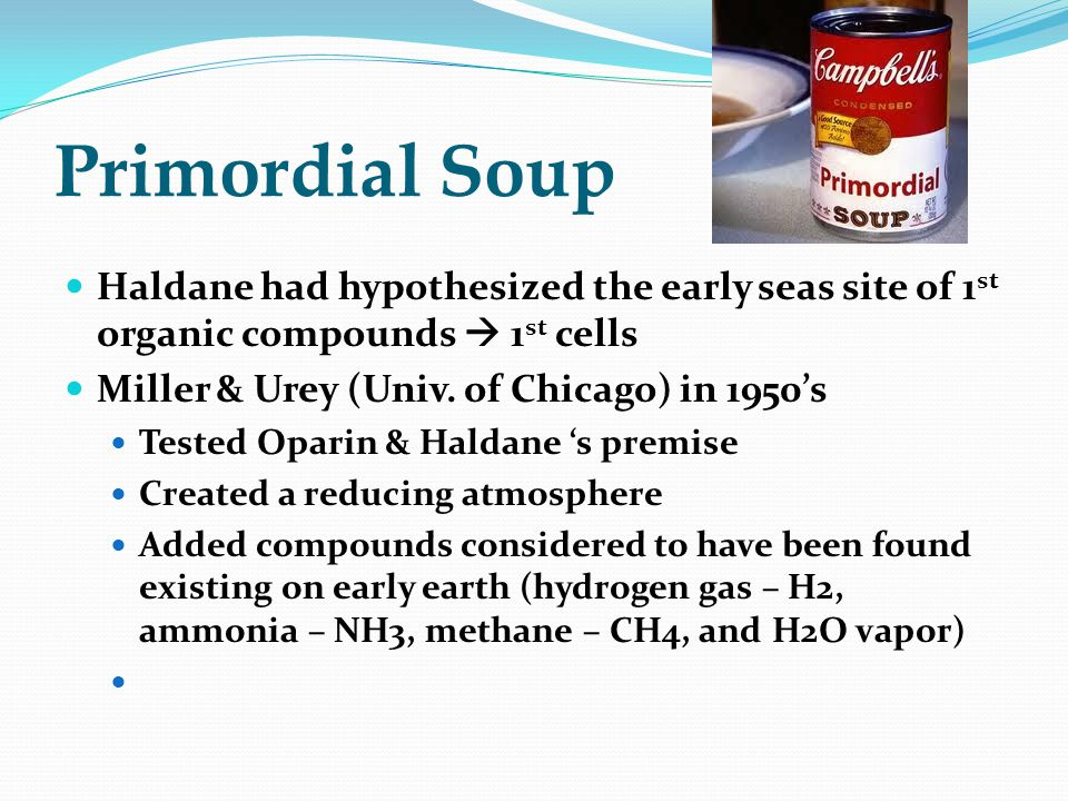 Primordial Soup Haldane had hypothesized the early seas site of 1 st organic compounds  1 st cells Miller & Urey (Univ.