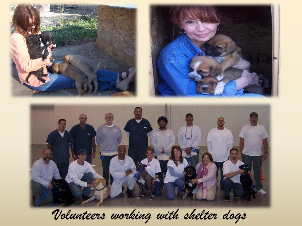 Volunteers working with shelter dogs