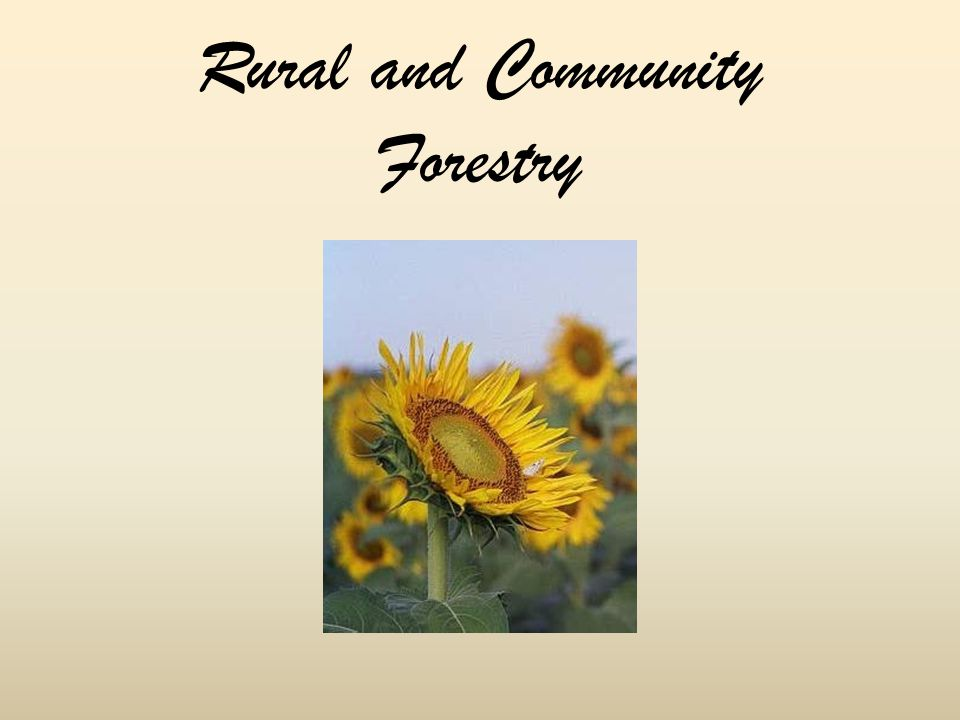 Rural and Community Forestry