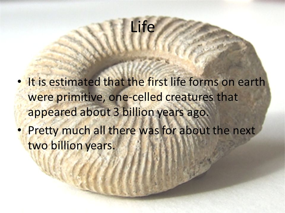 Life It is estimated that the first life forms on earth were primitive, one-celled creatures that appeared about 3 billion years ago. Pretty much all