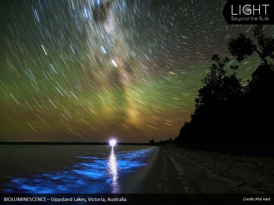 BIOLUMINESCENCE – Gippsland Lakes, Victoria, Australia Credit: Phil Hart