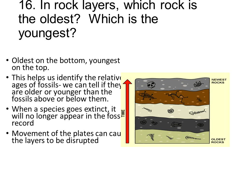 16. In rock layers, which rock is the oldest? Which is the youngest? Oldest on the bottom, youngest on the top. This helps us identify the relative ag