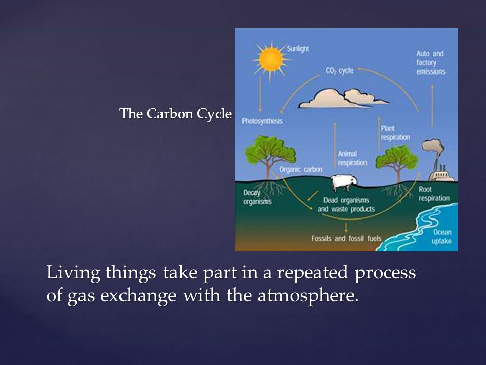 The Carbon Cycle Living things take part in a repeated process of gas exchange with the atmosphere.