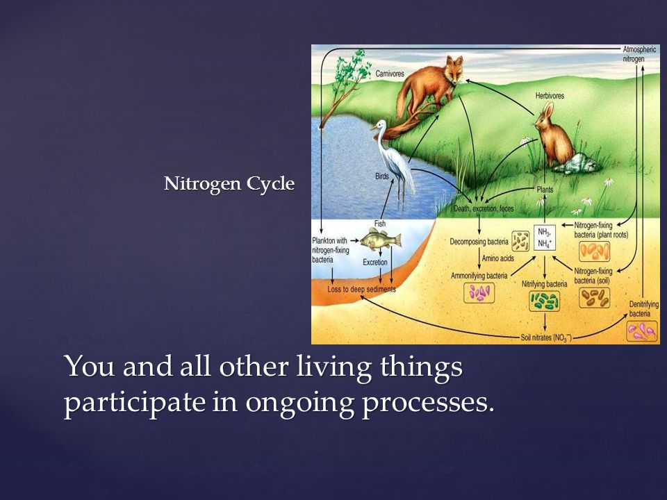 Nitrogen Cycle You and all other living things participate in ongoing processes.